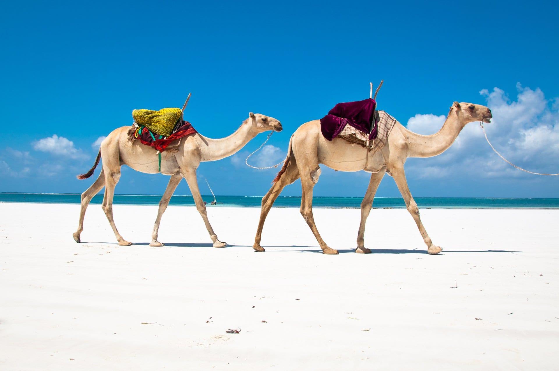 diani beach best beaches in kenya