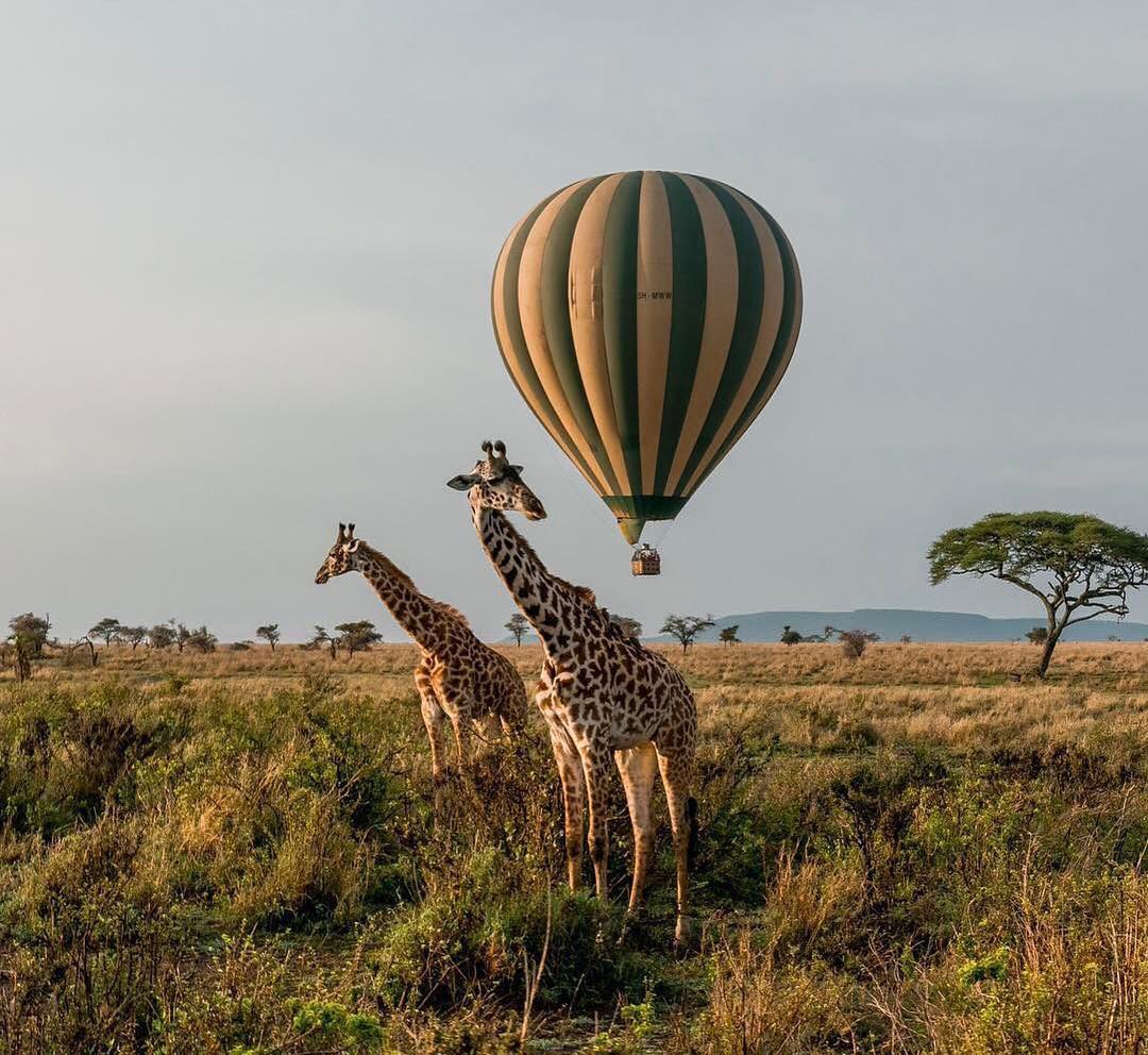 guide to Serengeti National Park