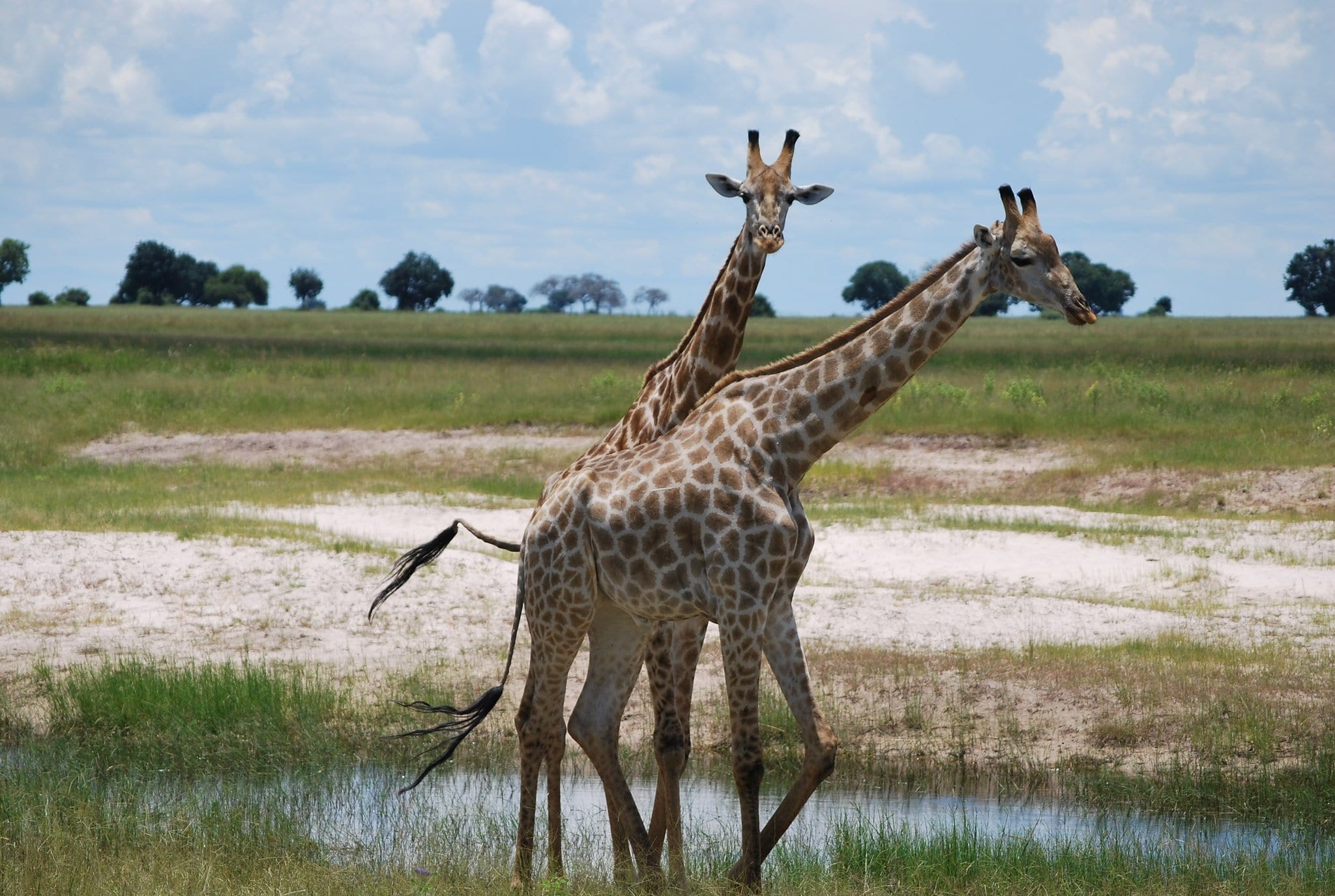 Chobe National Park (Botswana)