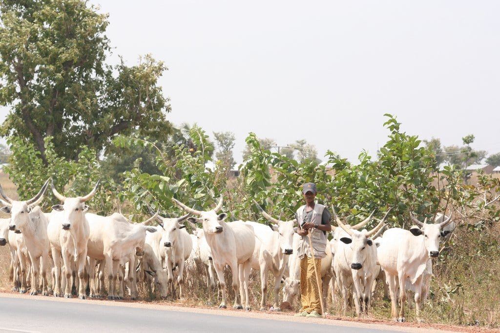fact about fulani herdsmen in africa