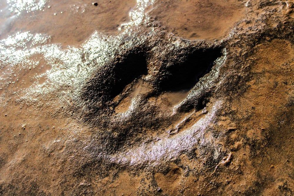 Dinosaur footprints in Lesotho