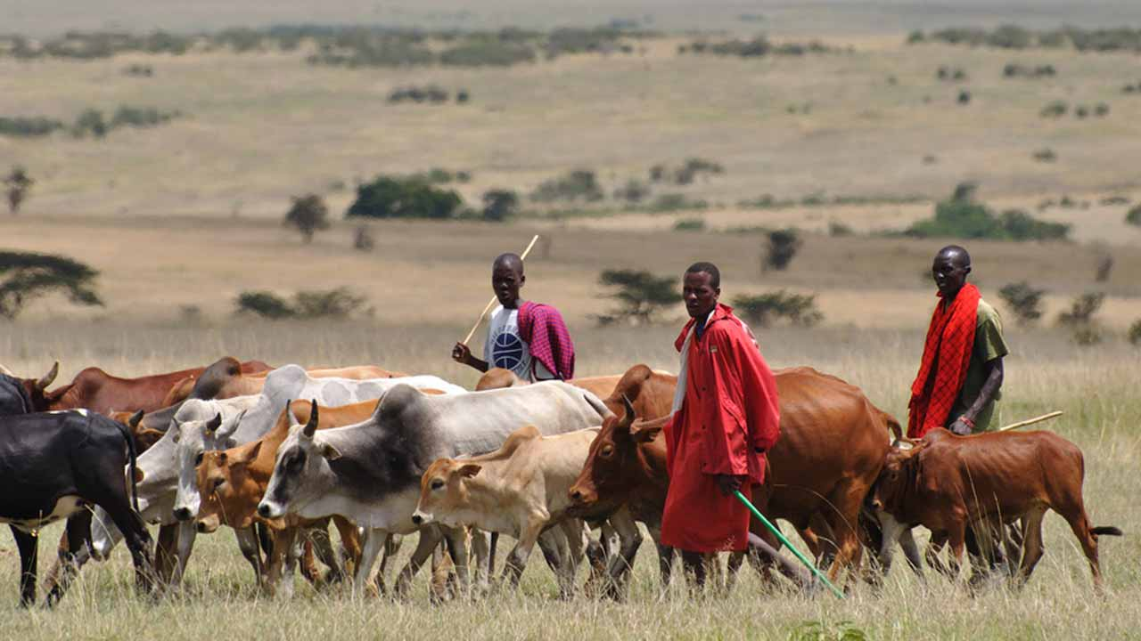 Interesting Facts About Fulani Herdsmen