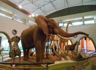 Museums in Kenya