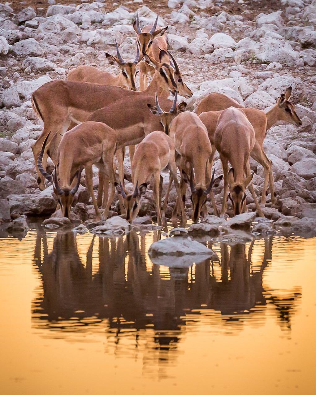 Okaukuejo waterhole, Namibia