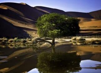 Reasons to Visit Namibia