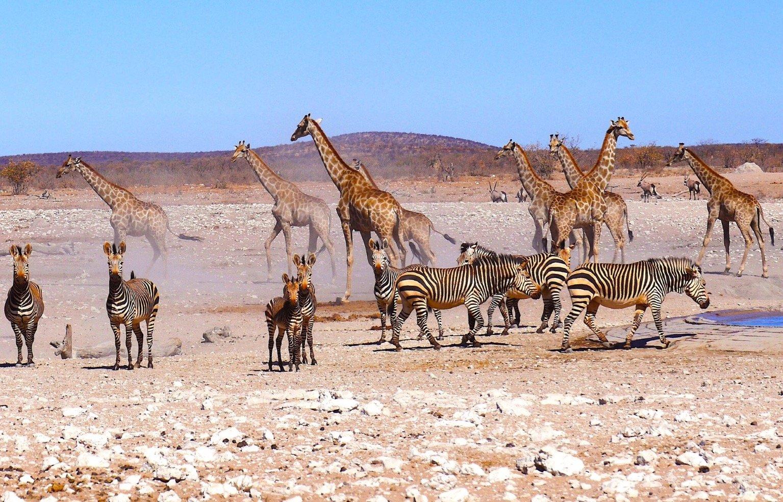 visiting the Etosha National Park