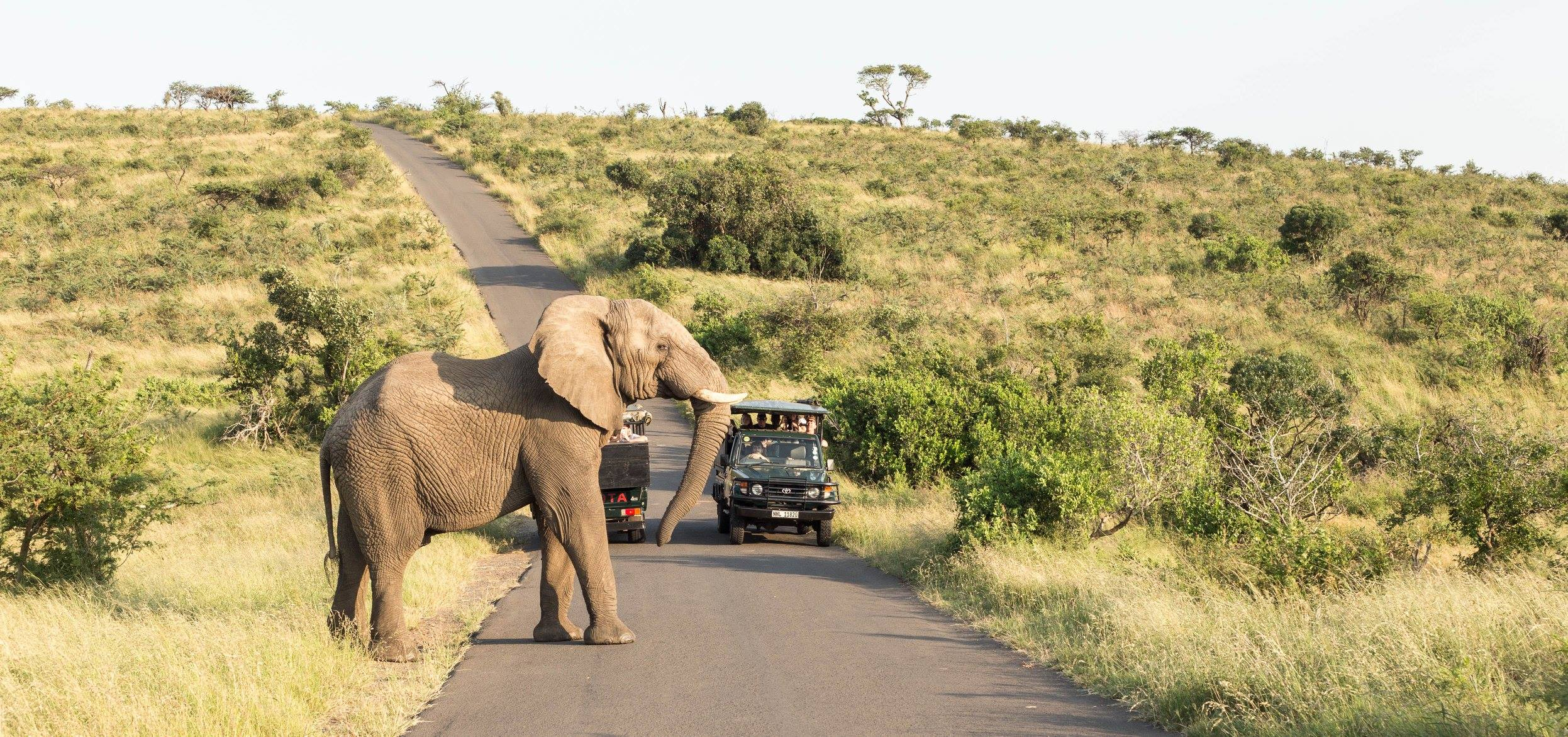 Hluhluwe Big 5 Safaris Top Things to Do in South Africa