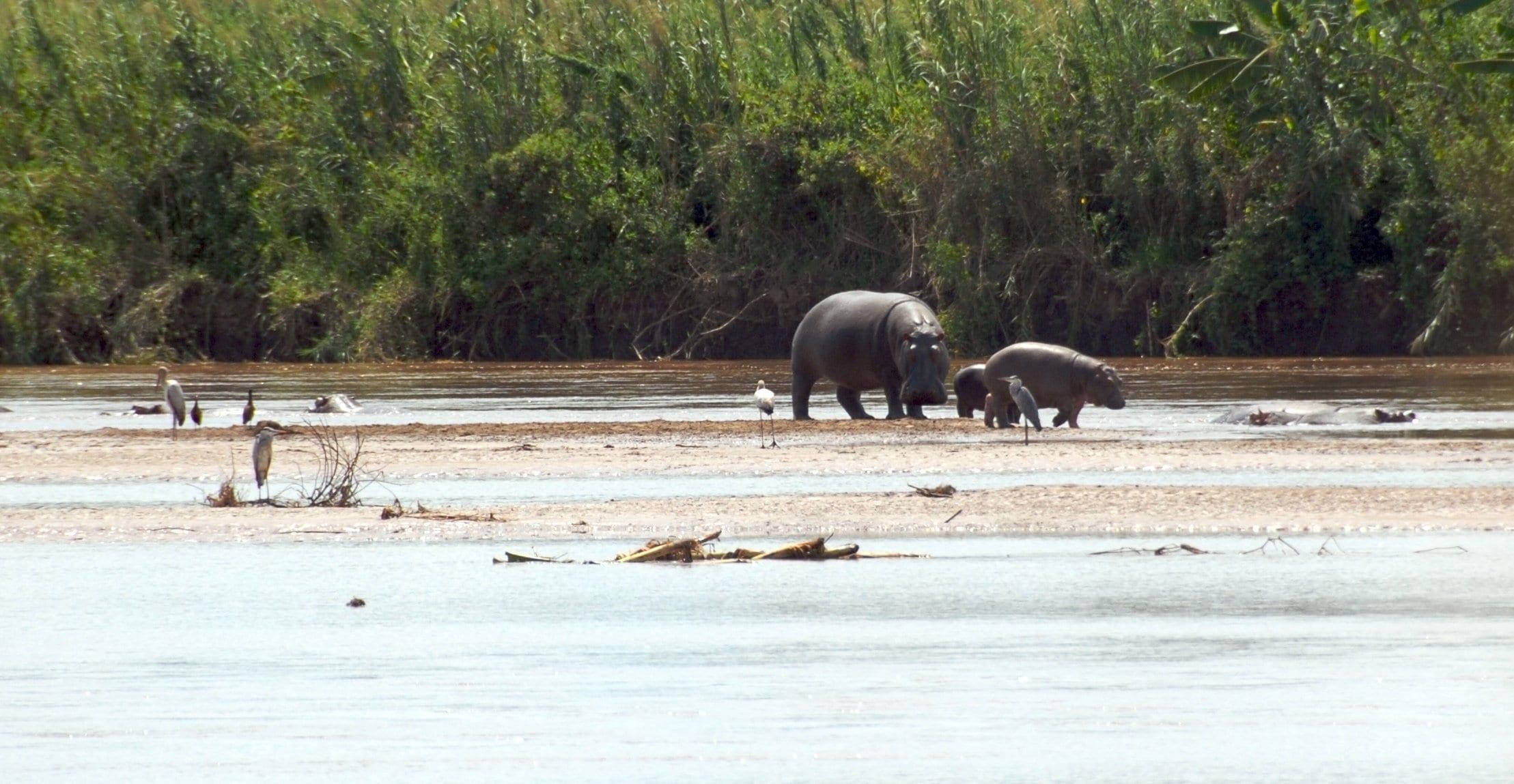 top things to do in Bujumbura: Rusizi National Park