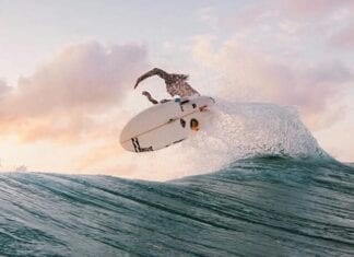 Best Surf Spots in Mozambique Africa