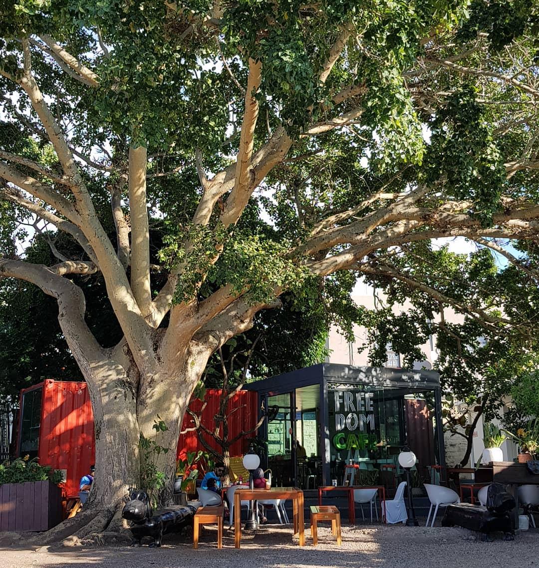 Freedom Café Instagram-worthy cafe in Durban