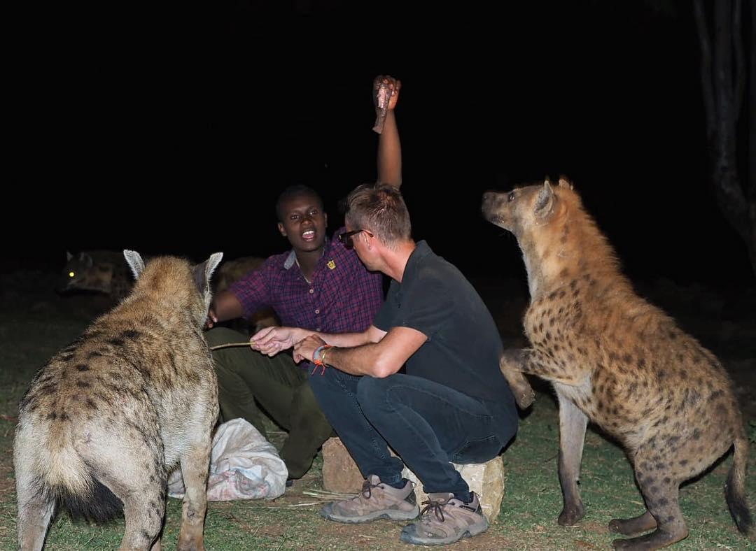 Harar hyena feeding