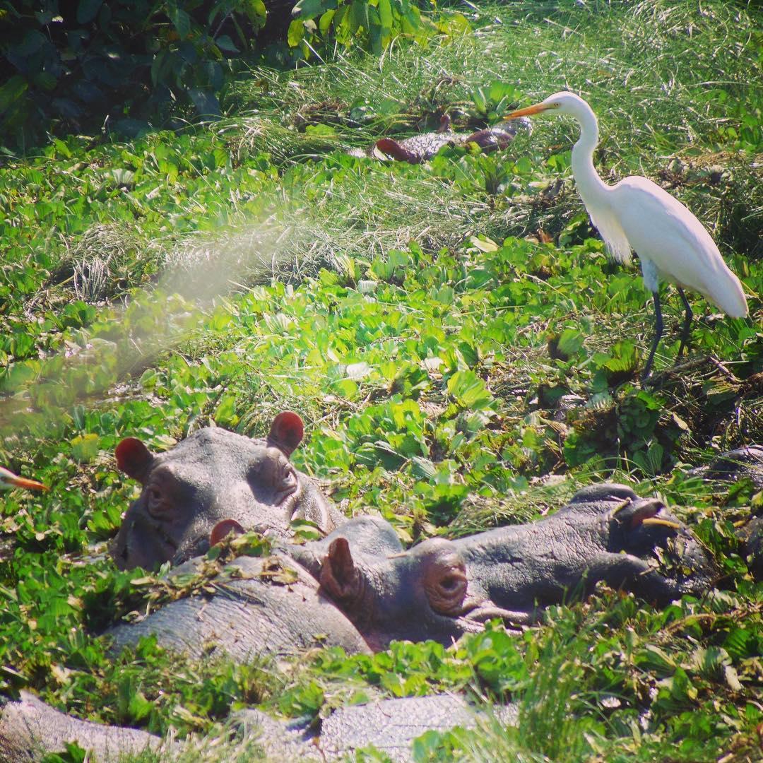 OrangoNational Park