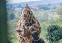 Giraffe Centre guide Nairobi