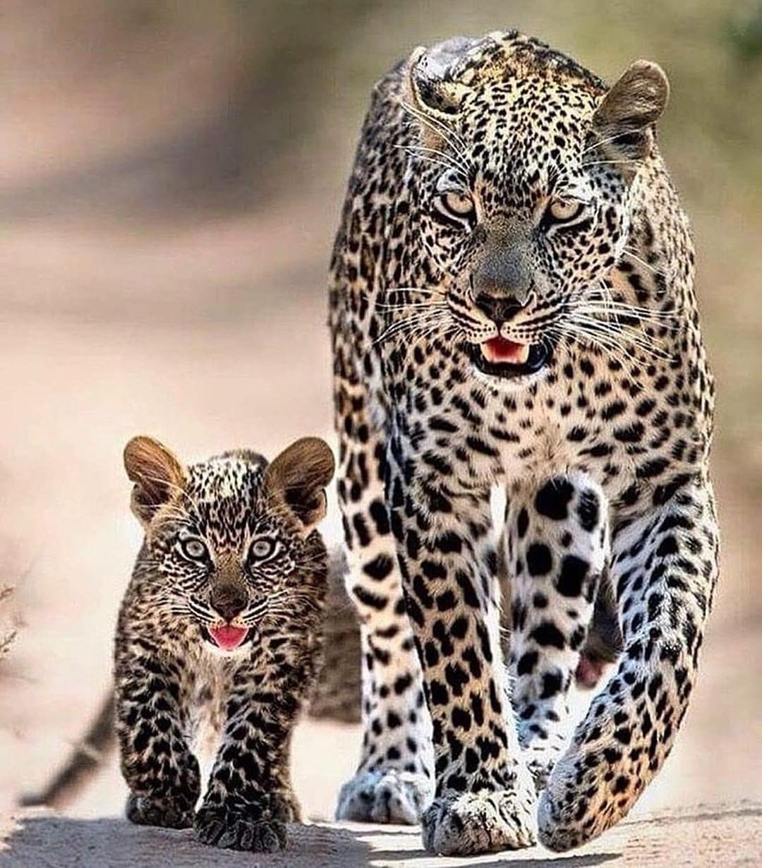 Kruger National Par