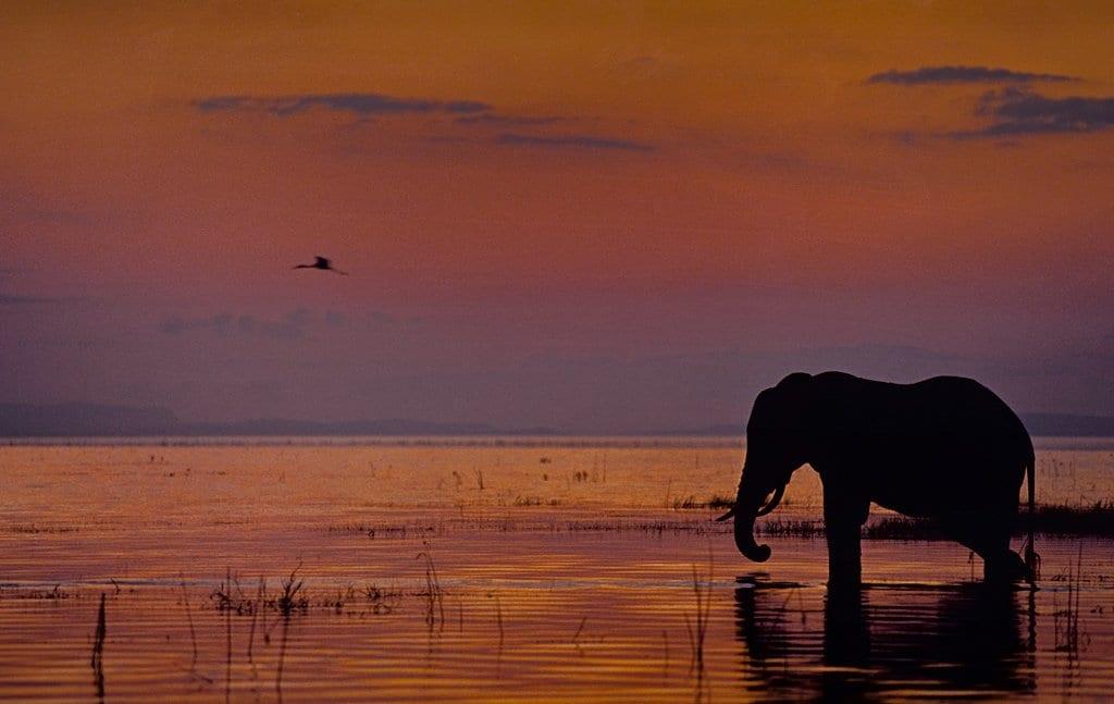 lake kariba zambia