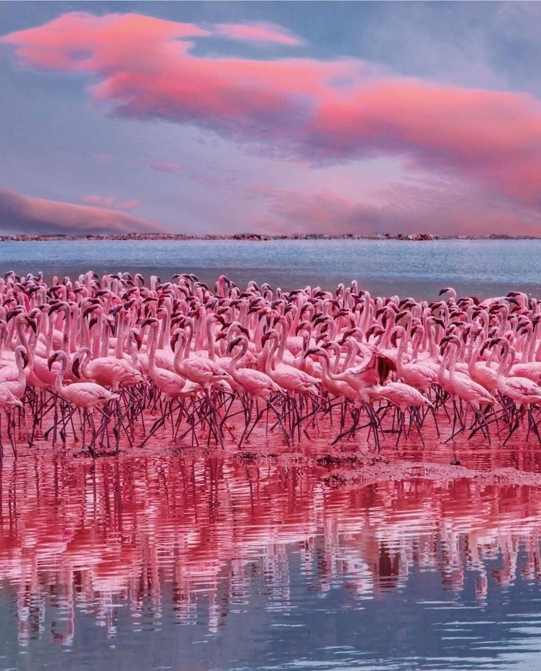 lake Nakuru pink coloured flamingos