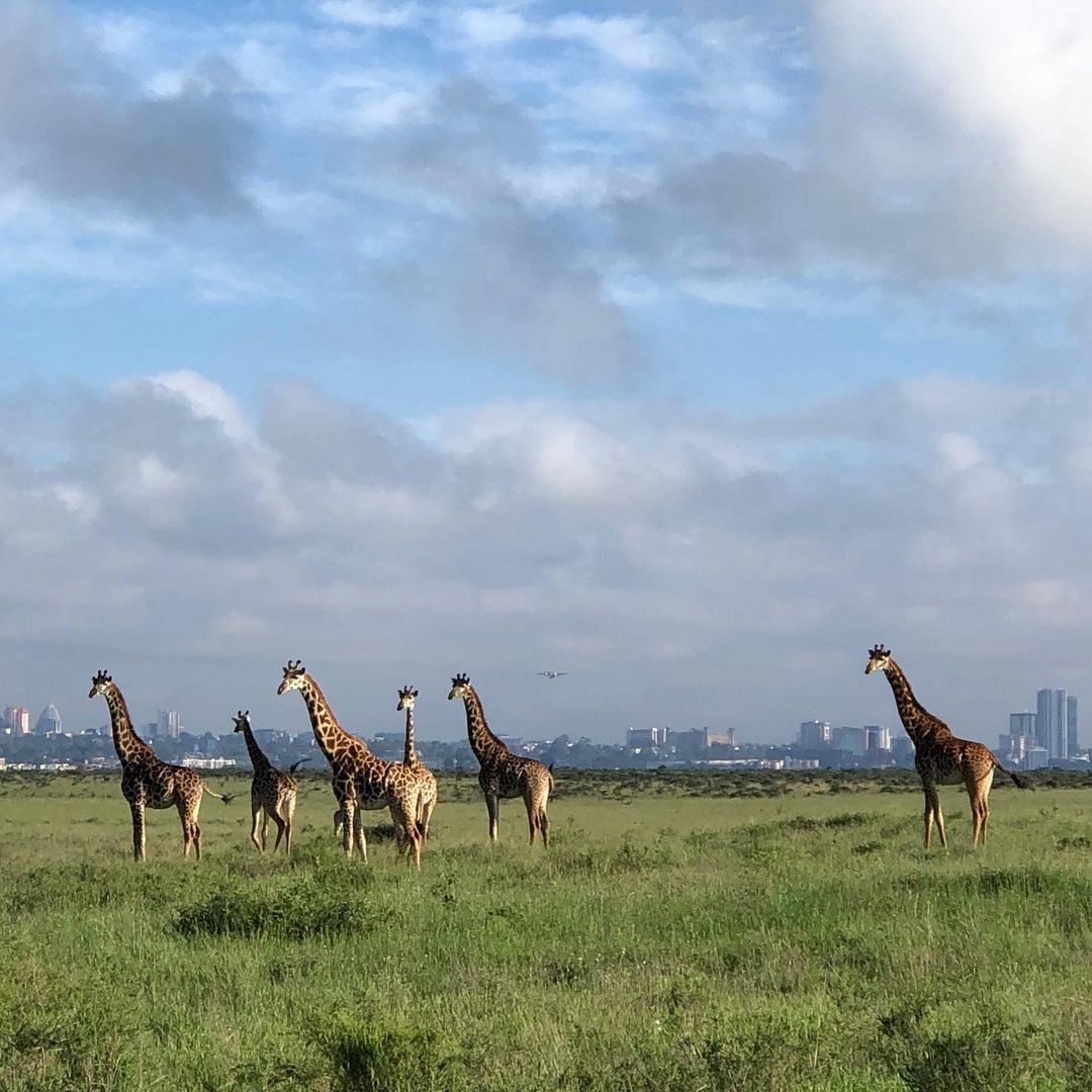 africa's top national parks