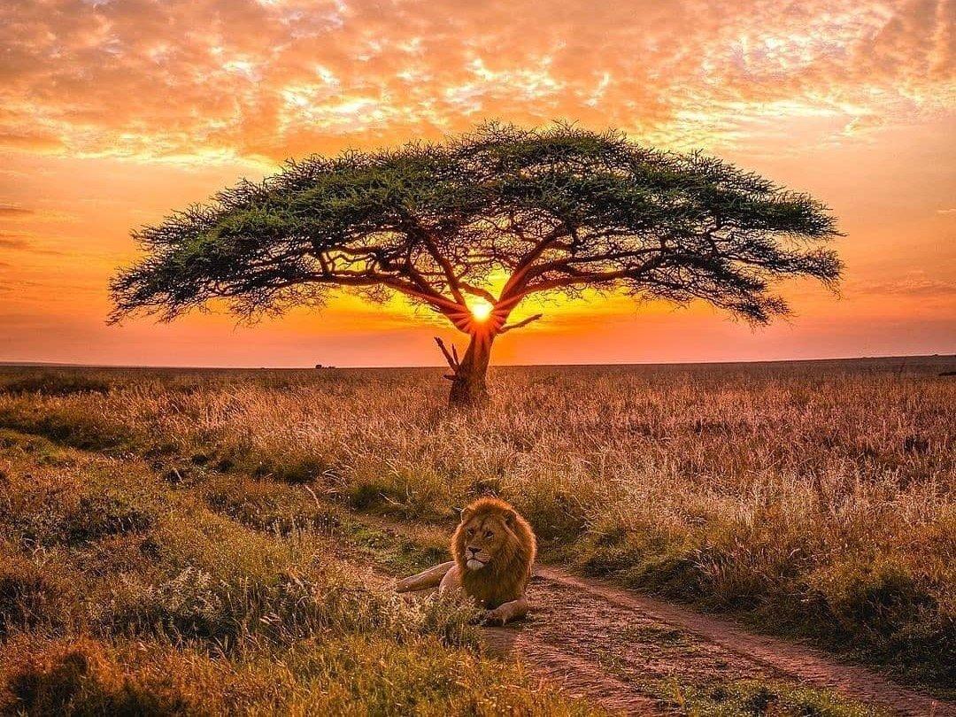 nature lovers destination Serengeti National Park Tanzania