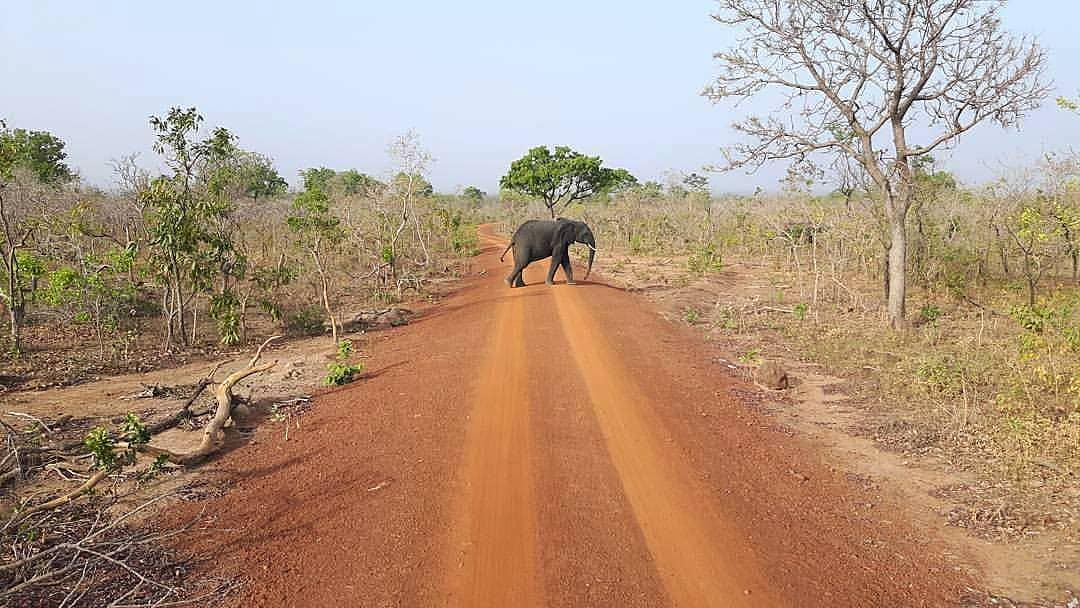 safari park ghana