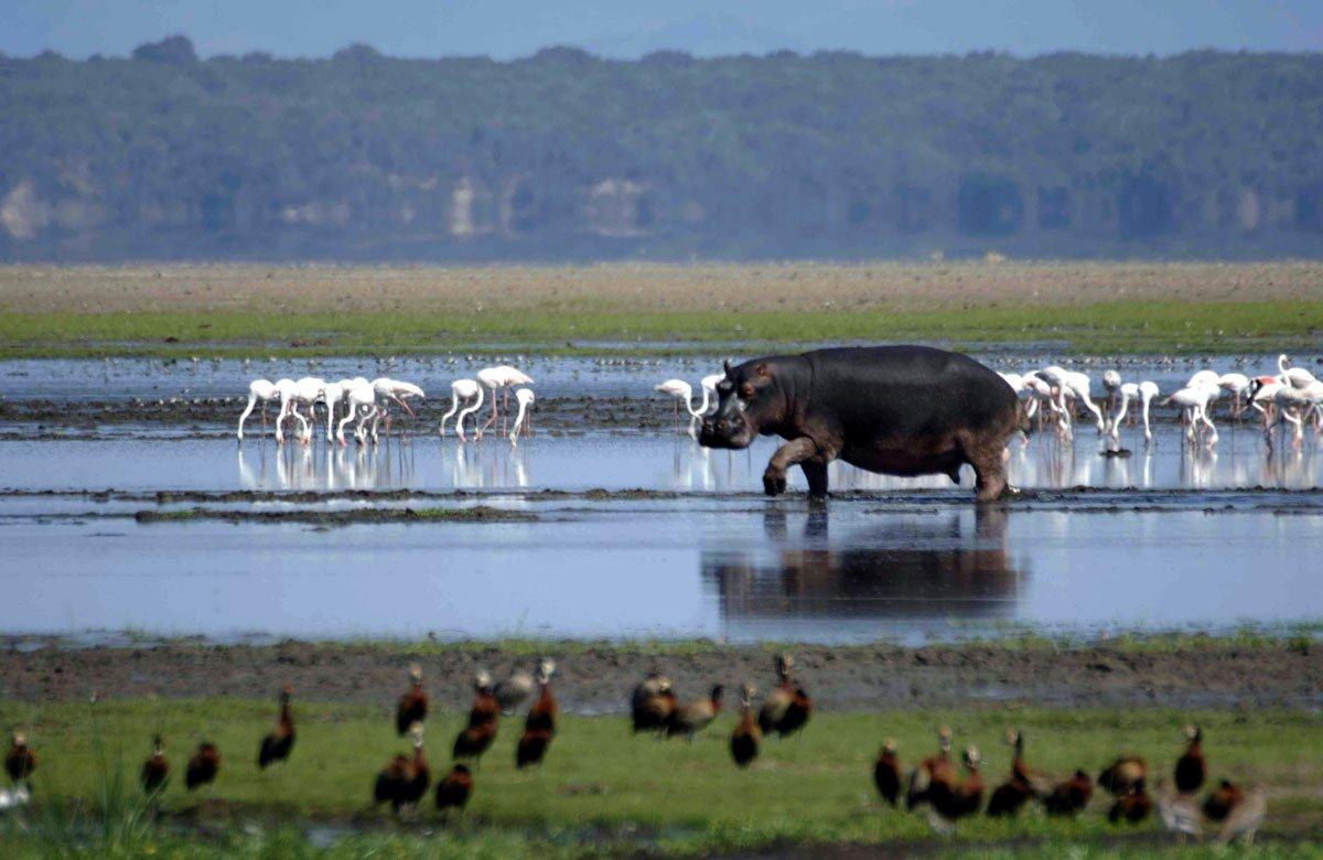 iSimangaliso hippo lake