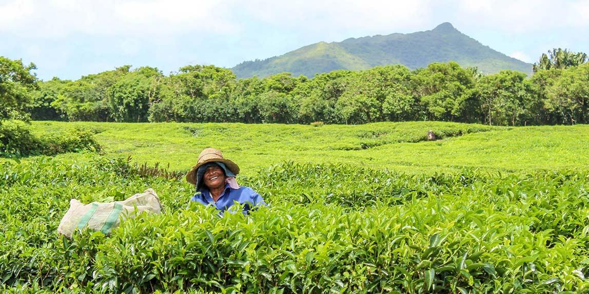 Mauritius Tea Route tour