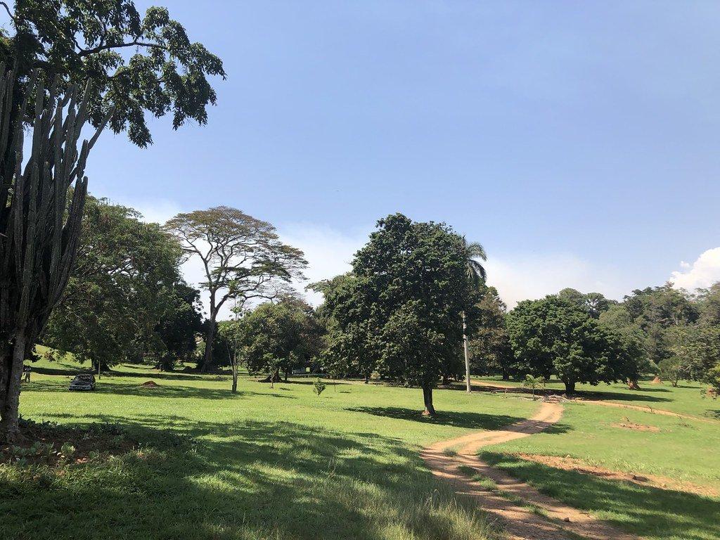 Botanical garden in Entebbe