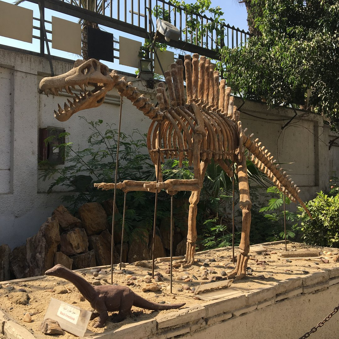 Geology Museum cairo