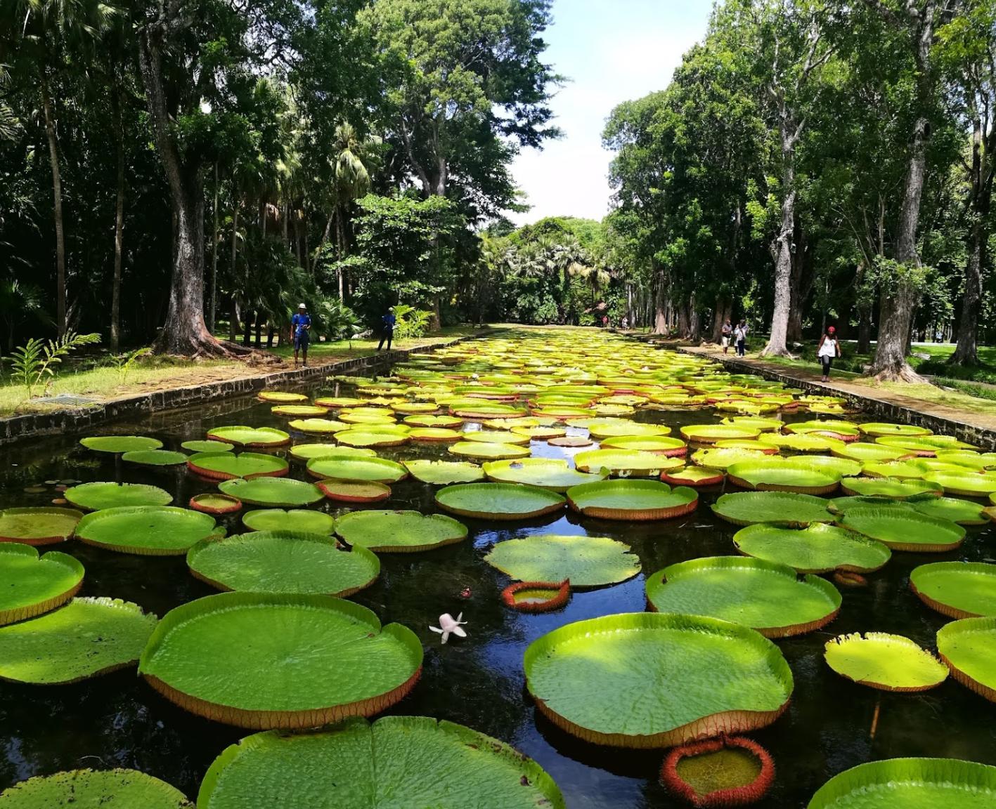 Botanical garden in Pamplemousses
