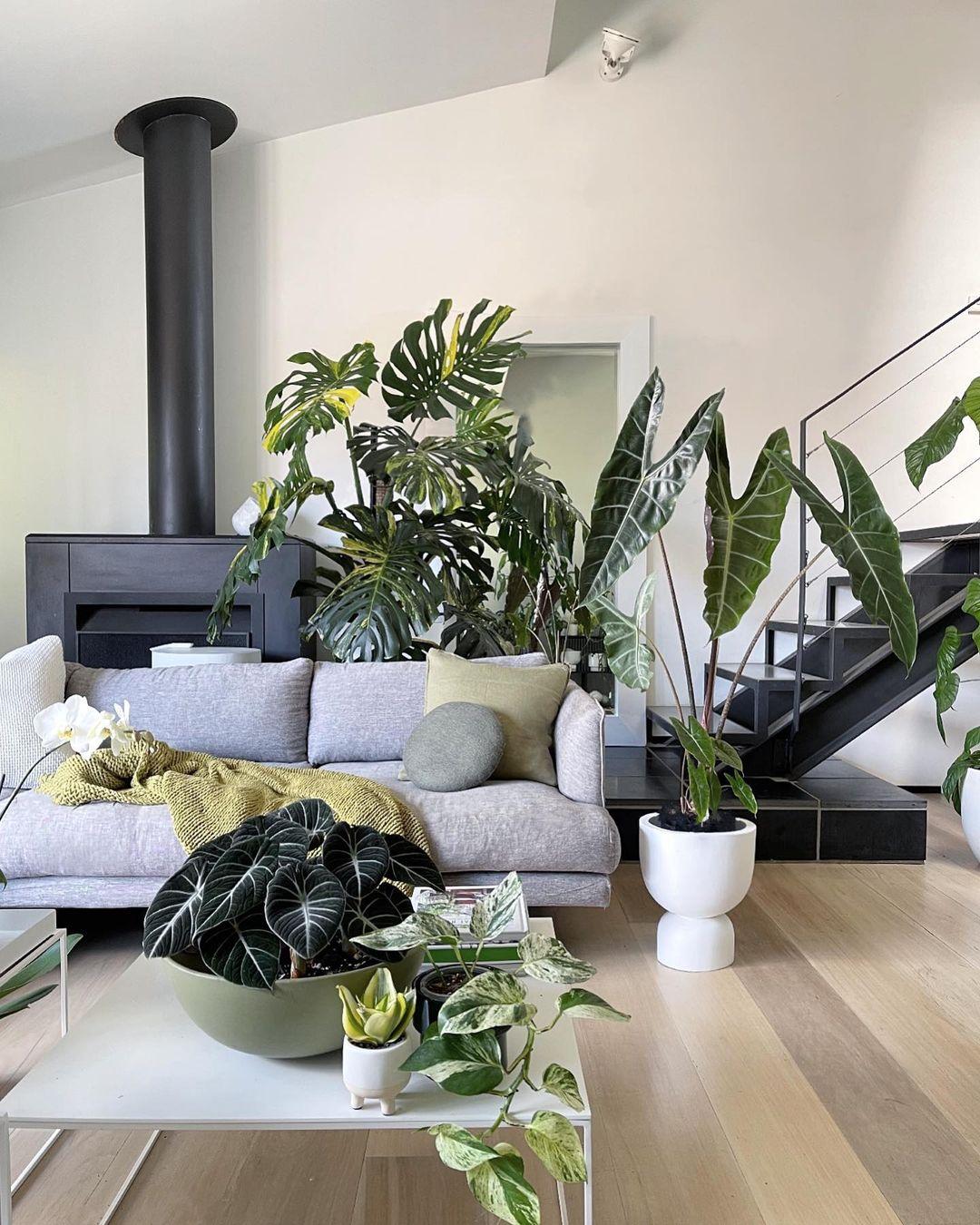 nature landscape living room