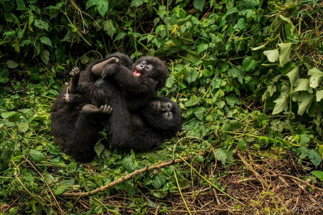 best month to Visit Rwanda