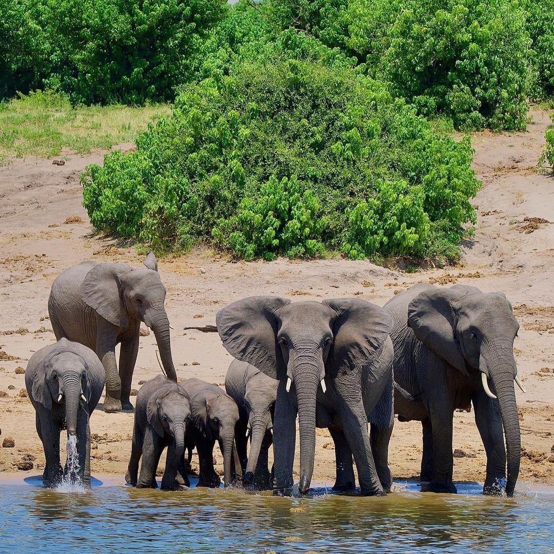 Botswana top places to sight elephant